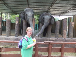 Me feeding the elephants some peanuts. , Paula T - September 2014