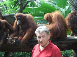Photo of Singapore Singapore Zoo Morning Tour with optional Jungle Breakfast amongst Orangutans Who's Who?