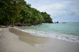Photo of San Jose Manuel Antonio National Park Day Trip from San Jose beach