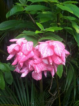 Photo of St Lucia St Lucia Aerial Tram & Rainforest Tour Colorful flowers