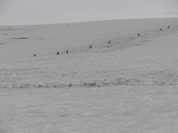 The snowmobiling on the glacier , Charles S. S - June 2011
