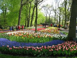 Photo of Amsterdam Keukenhof Gardens and Tulip Fields Tour from Amsterdam Keukenhof Gardens