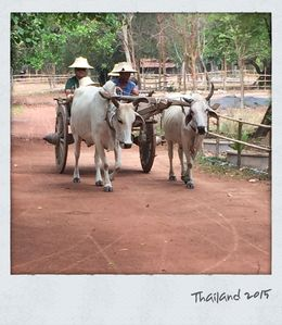 Ox cart ride complete with hats! , MICHELLE PRICE P - March 2015