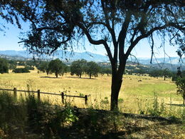 This is a beautiful landscape of the countryside along the way between Santa Barbara and Solvang. , Debra M - July 2014