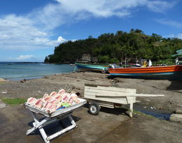Photo of St Lucia Soufriere Island Delight Half-Day Trip From St Lucia Conch Shells for sale