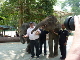 Photo of Kuala Lumpur Private Tour: Elephant Orphanage Sanctuary Day Tour from Kuala Lumpur I am the one in the middle