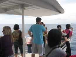 Photo of Oahu Oahu Whale Watching Cruise Looking out for Whales