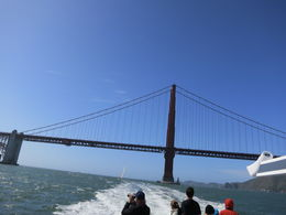 Photo of San Francisco Whale Watching & Wildlife Eco Tour from San Francisco Passing back under the bridge