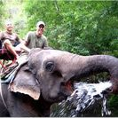 Photo of Bangkok Khao Yai National Park and Elephant Ride Day Trip from Bangkok Samboon the Elephant, Khao Yai National Park