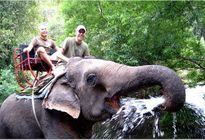 Photo of Bangkok Khao Yai National Park and Elephant Ride Day Trip from Bangkok