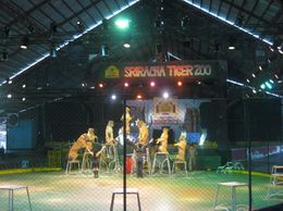 Photo of Pattaya Tiger Zoo Tour from Pattaya including Lunch Tiger performance