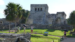 Cool morning in Tulum , alanldevereauxii - November 2015