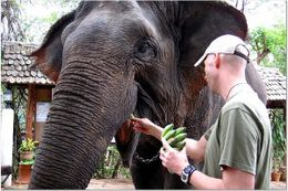 She looks so kind and sweet. It's hard to believe that there are people out there who would hurt elephants., Andrew N - February 2008