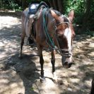 Photo of Guanacaste and Northwest Buena Vista Rainforest Combo Tour Horseback Riding