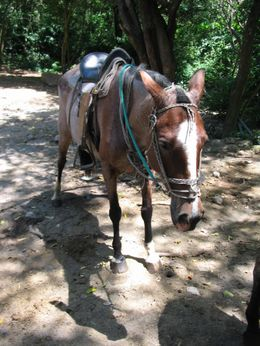 This is the horse I rode. Her name is Gina. She was tired afterward!!!, Lance K - April 2008