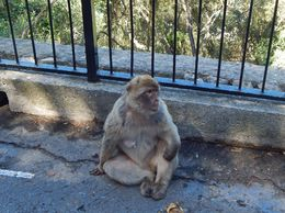 meeting the apes , kdw161 - May 2015