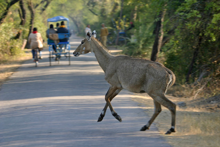 Koleado National Park - Jaipur