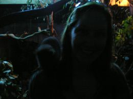 Yes, this is me in the nocturnal habitat display. You get to go inside and be part of the zoo exhibit while the creatures crawl on you!, Christine C - July 2008