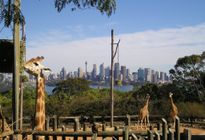 Photo of Sydney Sydney Taronga Zoo General Entry Ticket and Wild Australia Experience