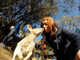 Photo of Sydney Small-Group Blue Mountains Day Trip from Sydney with River Cruise Kangaroo Kiss