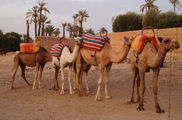 Our Camel Group , David W - November 2015