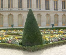 Photo of Paris Versailles Walking Tour with Optional Fountain Show Cone tree at Versailles