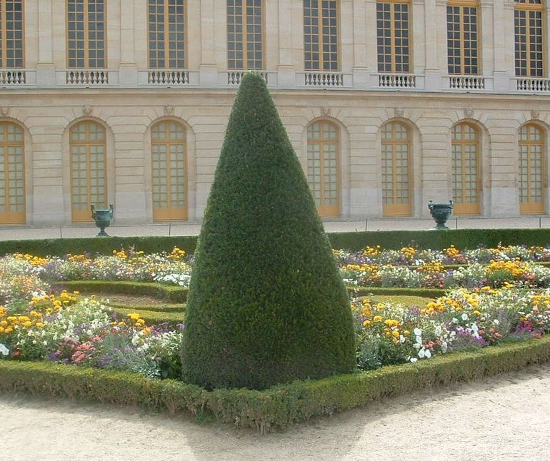Cone tree at Versailles - Paris