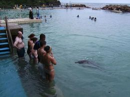 Waiting for the dolphin to do a trick - June 2008