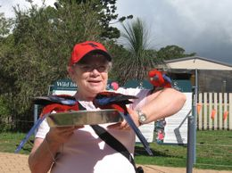 Sharon with more lorikeets than she can handle. - November 2009