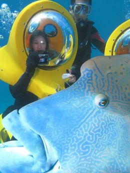 Photo of   Fun at the Great Barrier Reef