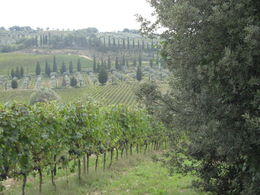 Photo of Rome Tuscany in One Day Sightseeing Tour from Rome View from Tuscan Farm: Poggioil Castellore