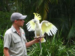 Photo of Cairns & the Tropical North Cairns Tropical Zoo Morning Tour including Breakfast Bird show