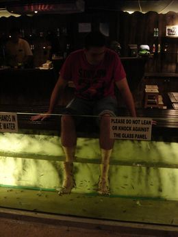 Photo of Singapore Singapore Night Safari with optional Buffet Dinner Fish Foot Therapy