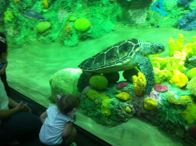 Giant Turtle - San Diego