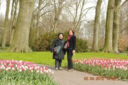Photo of Amsterdam Keukenhof Gardens and Tulip Fields Tour from Amsterdam Stroll in the Park