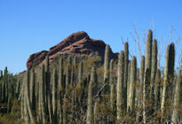 Photo of Phoenix Desert Botanical Gardens