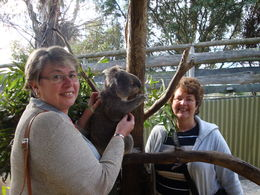 Sue and Tracey with Koala , Christopher P - May 2013