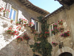 Photo of Rome Assisi and Orvieto Day Trip from Rome Flowers in Assisi
