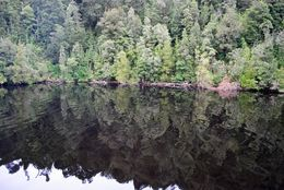 Photo of Tasmania Gordon River Cruise from Strahan Gordon River reflections