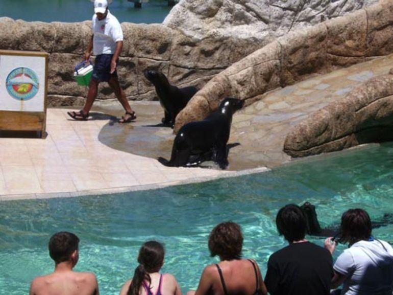 Sea Lion Encounter - Puerto Plata