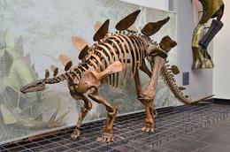 I am an amateur photographer. I hope you like these pictures of dinosaur skeletons taken in the Senckenberg museum, Frankfurt. , David Lally - November 2014