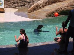 Photo of Puerto Plata Sea Lion Encounter at Ocean World Playing Catch