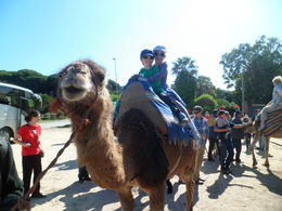 Two euros for a 2 minute camel ride. , Sharon L M - April 2012