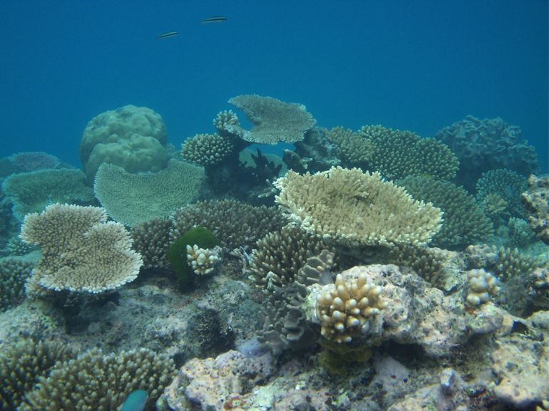 The outer reef - Cairns & the Tropical North