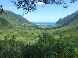 Photo of Oahu Full-Day or Half-Day Kualoa Ranch Adventure Photo taken 0n the Jungle Expedition