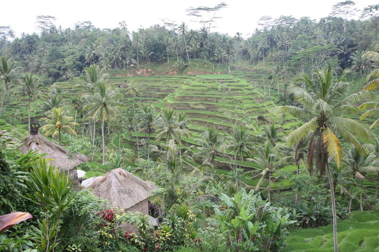 Terraced Rice Fields - Bali