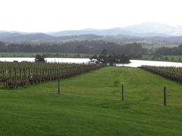 Taken from the verandah of Chandon , Kathy B - October 2012