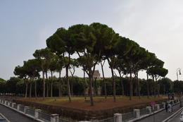 Photo of Rome Rome Hop-On Hop-Off Sightseeing Tour Cool trees