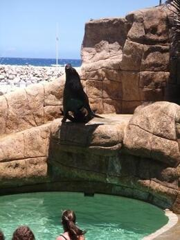 Photo of Puerto Plata Sea Lion Encounter at Ocean World Loving the crowd!