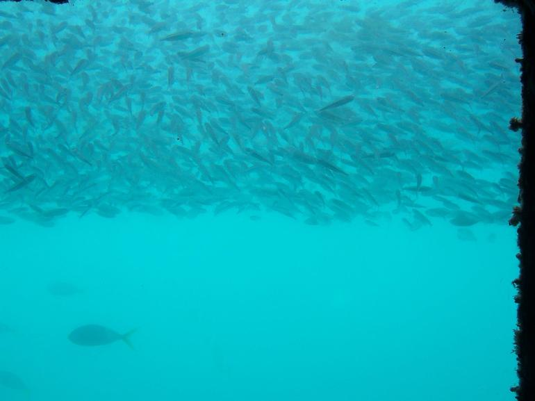 Underwater Window and Fish - The Whitsundays & Hamilton Island